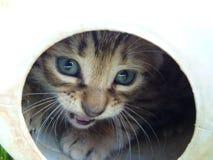 Un retrato de un gatito Imagen de archivo