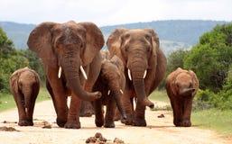 Un retrato de una familia de elefantes Imagen de archivo libre de regalías