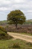 Un retrato del árbol en el nuevo bosque Imagen de archivo