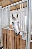 Un retrato del caballo en establo detrás de la jaula imagen de archivo