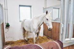 Un retrato del caballo en establo detrás de la jaula Foto de archivo libre de regalías