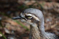 Un retrato del pájaro imagen de archivo libre de regalías