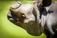 Un retrato del rinoceronte Imagen de archivo