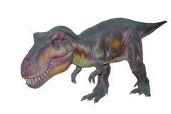 Un rex aislado asustadizo de los dinosaurios T de Dino Imagen de archivo libre de regalías