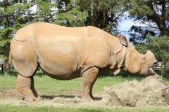 Un rhinocéros Photos libres de droits