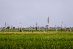 Un ricefield Imagenes de archivo