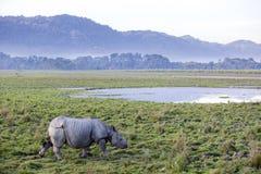 Un rinoceronte cornuto fotografia stock