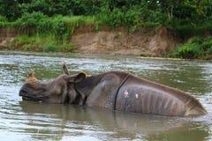 Un rinoceronte nel fiume fotografie stock libere da diritti