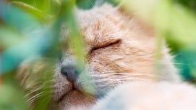 Un riposo marrone del gatto nella pianta verde Fotografie Stock