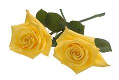Un ritaglio giallo delle due rose Immagine Stock