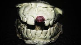 Un ritratto dei denti immagine stock