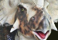 Un ritratto del fronte di un dinosauro di Ceratopsid Fotografie Stock Libere da Diritti