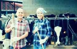 Un ritratto di due agricoltori si avvicina al granaio di mucche Immagini Stock