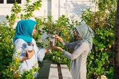 Un ritratto di due belle donne del hijab ha diviso insieme il caff? e le mandorle davanti ai loro caff? che stanno e pettegolati immagini stock libere da diritti