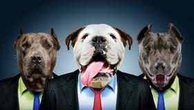 Un ritratto di tre cani di affari Immagini Stock