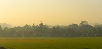 Un riz met en place dans le pays tropical le matin Images libres de droits