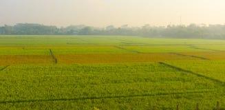 Un riz met en place dans le pays tropical le matin Photographie stock