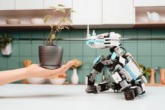 Un robot de rhinocéros se repose sur la table de cuisine Une main du ` s de femme est près, qui tient un petit pot Photos stock