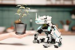Un robot de rhinocéros se repose sur la table de cuisine Une main du ` s de femme est près, qui tient un petit pot Images stock