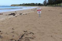 Un rojo, blancos y no ennegrecen ningún perro firman en una playa del peatón solamente fotografía de archivo