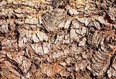 Un rondin d'arbre prêt pour la coupure Texture en bois, Na de texture d'écorce d'arbre image libre de droits