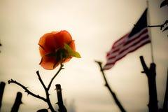 Un rose s'est levé Photos libres de droits