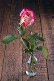 Un rose simple a monté dans un vase en verre photo libre de droits