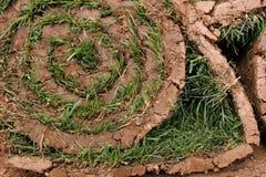 Un rotolo di tappeto erboso Fotografia Stock