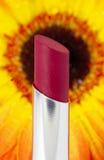 Un rouge à lievres avec la chaleur tropicale Photo libre de droits