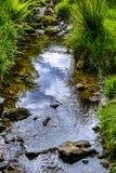 Un ruscello della montagna su primavera nella fine su Fotografia Stock Libera da Diritti