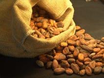 Haricots de cacao Photographie stock libre de droits