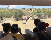 Un safari dal parco della fauna selvatica dell'Africa fotografia stock libera da diritti