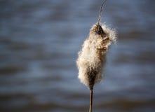 Salice di primavera dal lago Immagini Stock Libere da Diritti