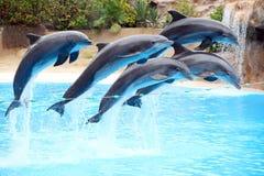 Un salto dei cinque delfini Immagine Stock Libera da Diritti