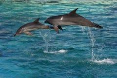 Un salto dei due delfini Fotografie Stock