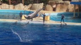 Un salto del delfino Immagine Stock Libera da Diritti