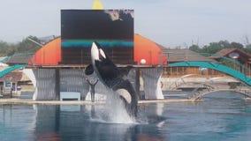 Un salto dell'orca Immagine Stock Libera da Diritti