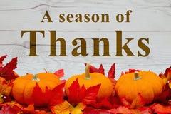 Un saludo de la acción de gracias Imagen de archivo