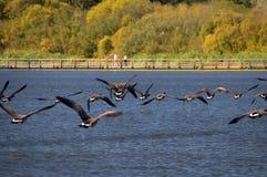 Un santuario della natura in autunno Fotografia Stock
