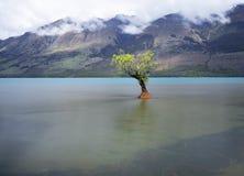 Un sauce solo con agua clara y el fondo hermoso de la montaña Foto de archivo