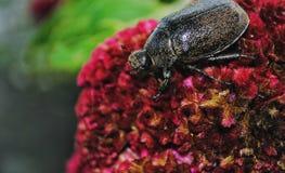 Un scarabée cette terre sur une feuille Images stock