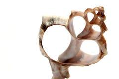 Un seashell cutted Photos libres de droits