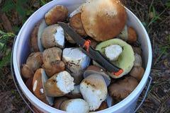 Un seau de champignons blancs Images stock