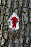 Un segno sulla corteccia di vecchia quercia Immagini Stock Libere da Diritti
