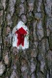Un segno sulla corteccia di vecchia quercia Fotografie Stock Libere da Diritti