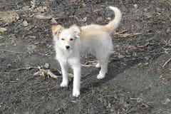 Un segundo resto en los perritos imágenes de archivo libres de regalías