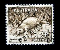 Un sello impreso en Australia muestra una imagen del anatinus del Ornithorhynchus del ornitorrinco en valor en 9d fotografía de archivo libre de regalías