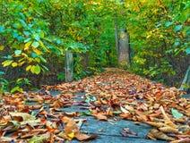 Un sentiero costiero autunnale attraverso la foresta Fotografia Stock
