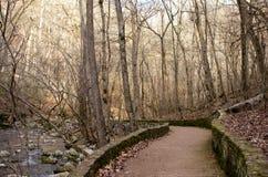 Un sentiero nel bosco Immagini Stock Libere da Diritti