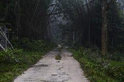 Un sentiero nel bosco fotografia stock libera da diritti
